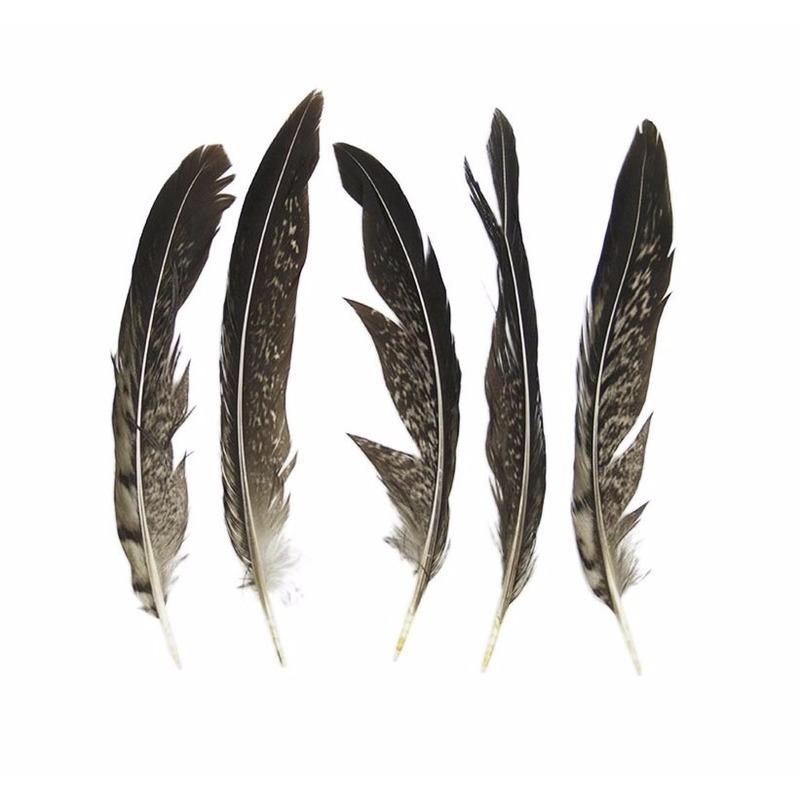 Lady Amherst fazant veren 13 cm 5 stuks