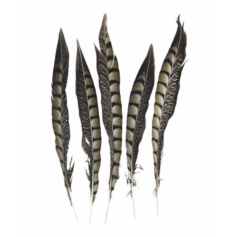 Lady Amherst fazant veren 28 cm 5 stuks